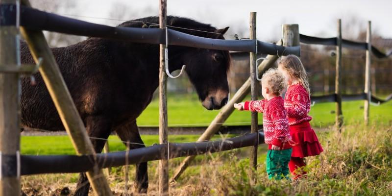 Kinder auf der Wiese mit Tieren